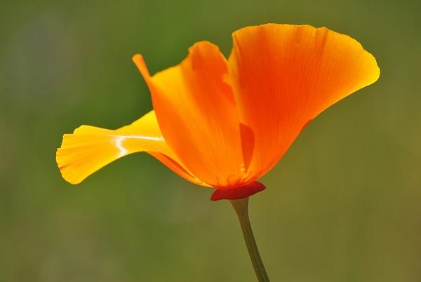 Week 3 - Orange by MeetupPhoto