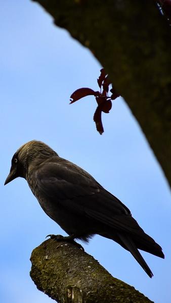 Wildlife - Birds by Danigraphics Photography