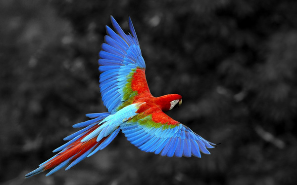 colorful-birds-hd-wallpapers-14 by Alextest