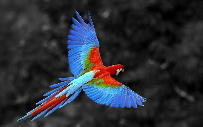 colorful-birds-hd-wallpapers-14