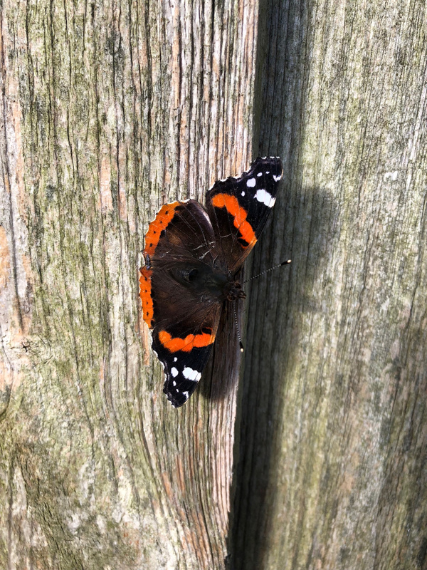 Butterfly in November