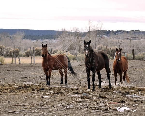 161214_panguitch_horses by HiddenrebelBass