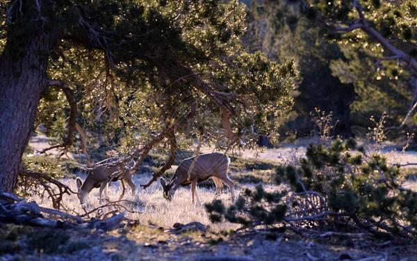 171022_gbnp_deer by HiddenrebelBass