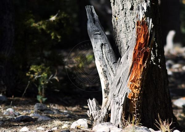 171022_gbnp_stump by HiddenrebelBass