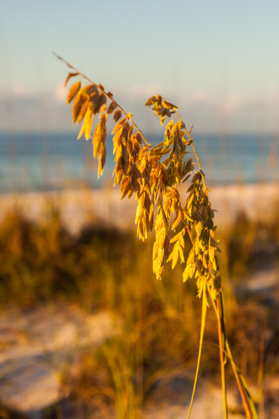 Pensacola Seascapes by FletcherImages