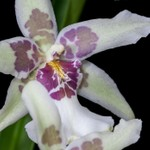 Deb's Orchids