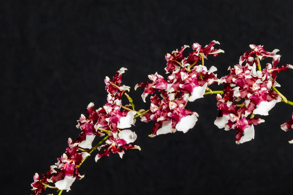 Deb's Orchids by FletcherImages by FletcherImages