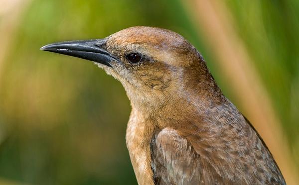Bird_LND0347_Rev1 by JamesALee