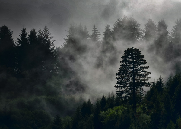 Oregon Lone Tree 17082006 ME Ver 2-2
