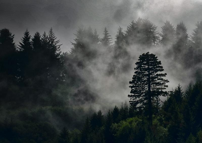 Oregon Lone Tree_17082006_ME_Ver 2-2