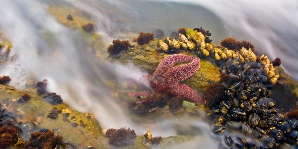 Starfish21402008 Rev1 FINALfor30x60Flattened by JamesALee