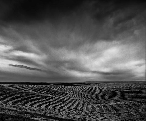 Wheatfield by KazHamano