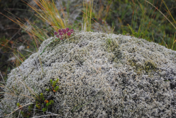 Did you miss moss photos? :) by Maria Dzeshchanka