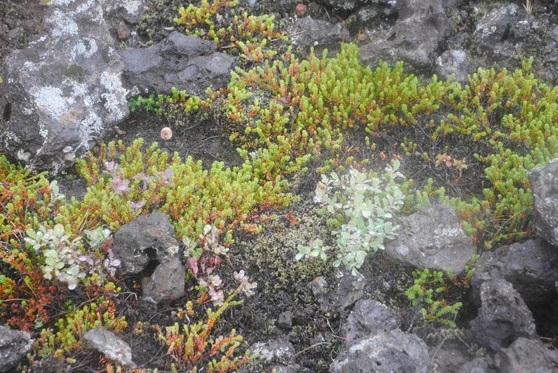 More moss :)