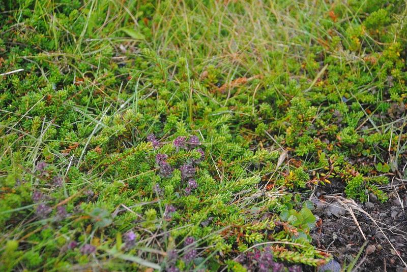 More flora photos :)