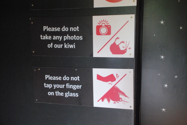 Te Puia: don't disturb kiwis by Maria Dzeshchanka