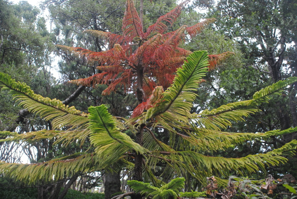 Wellington Botanic Garden by Maria Dzeshchanka