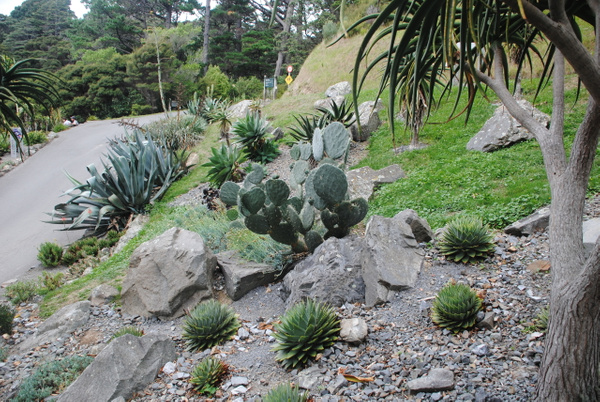 Wellington Botanic Garden by Maria Dzeshchanka