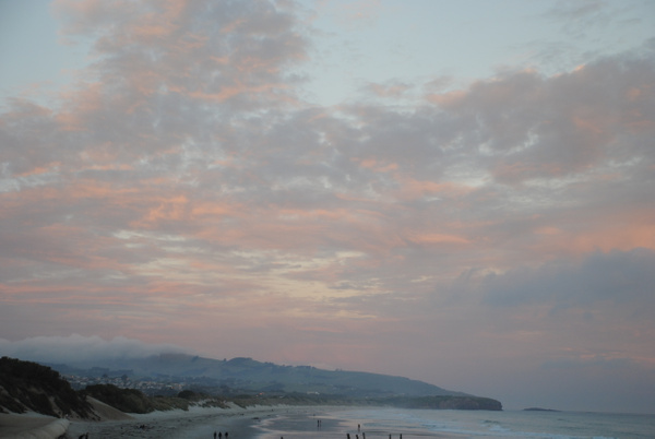 Dunedin by Maria Dzeshchanka
