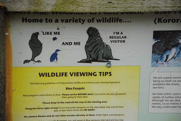 Wildlife viewing tips by Maria Dzeshchanka