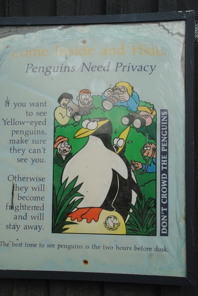 Penguins' privacy by Maria Dzeshchanka