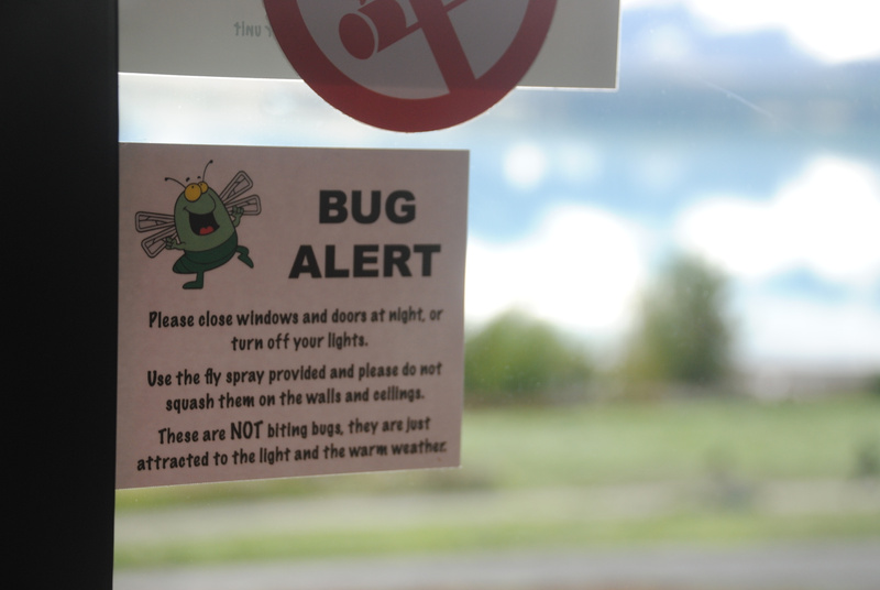 Lake Tekapo: bug alert