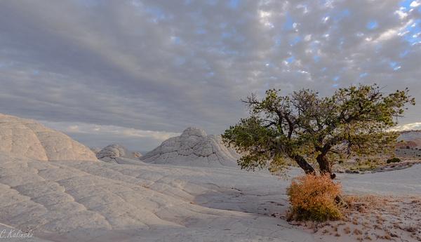 White Pocket, Vermilion Cliffs Nat'l Monument by Cass...