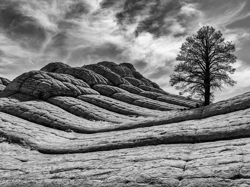 Tree & Sky & Flowing Stone