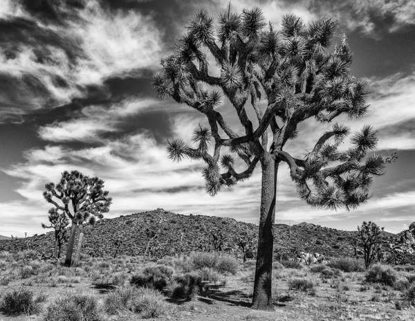 Vista At Joshua Tree National Park