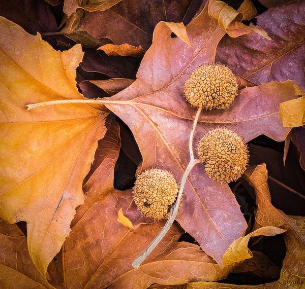 Autumn In Sabino Canyon by Cass Kalinski