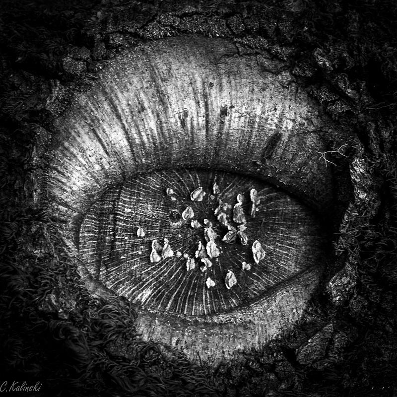 Fangorn's Eye