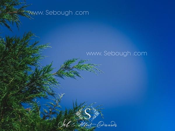 Sebough Albert Edwards Photo-125 by SeboughAlbertedwards