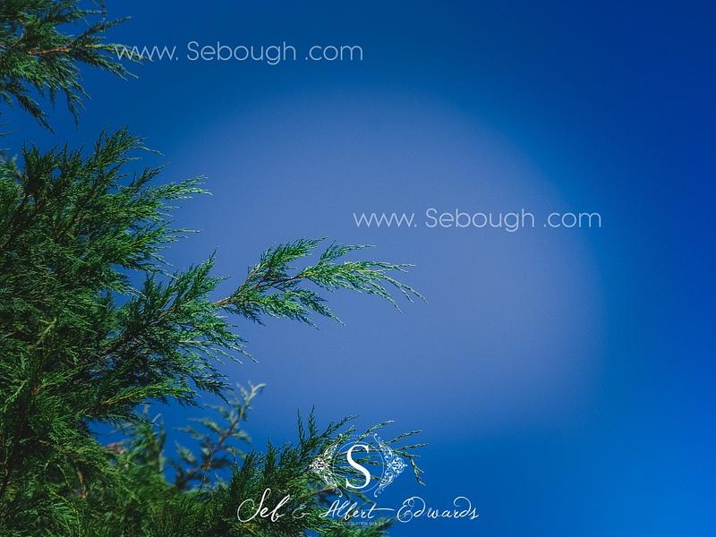 Sebough Albert Edwards Photo-125