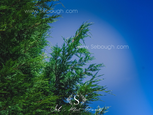 Sebough Albert Edwards Photo-126 by SeboughAlbertedwards