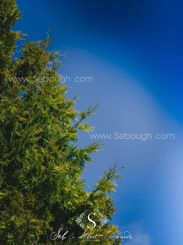 Sebough Albert Edwards Photo-128