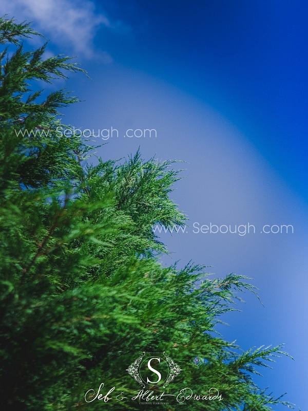 Sebough Albert Edwards Photo-132