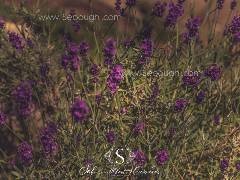 Sebough Albert Edwards Photo-134