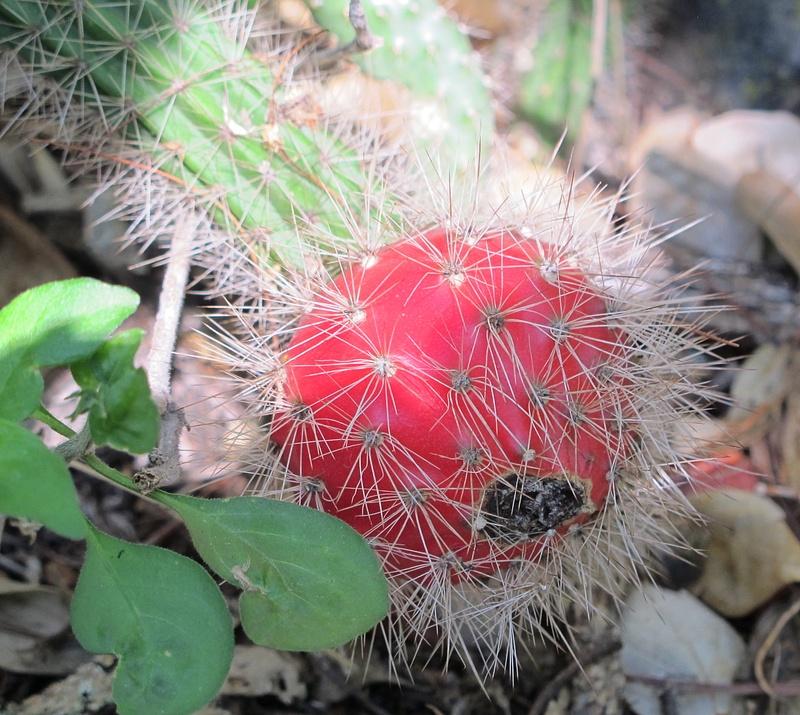 Unusual Cactus