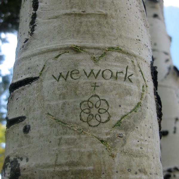 Ooma_S3_Jan_Birch tree_v2 (1) (1) by VanessaKahn20800