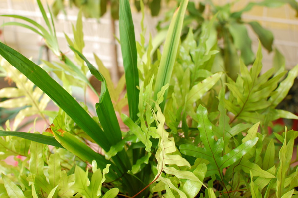 Green by Bartolomeo