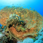 Sea Fan images from Awards in 2016