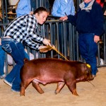 T&D Swine Show