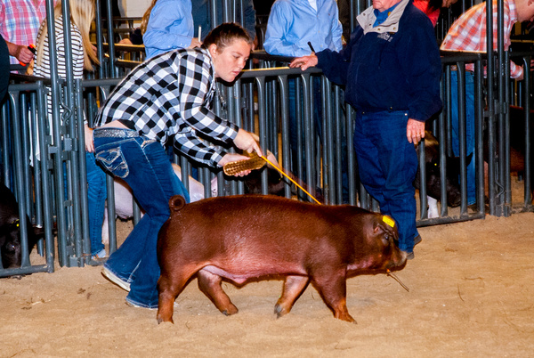 T&D Swine Show by MaryPeck