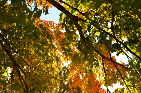 Fall Colors in WA by RandyMGarrett