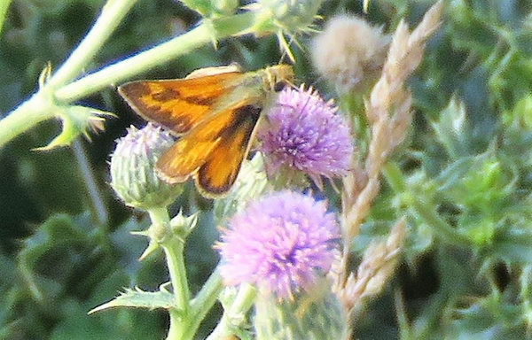 IMG_0795skipper by BeaHarrison