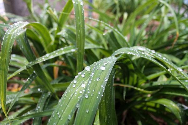 Water week 1 by P5KarenA