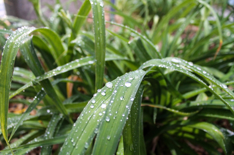 droplets on plants, this picture makes you feel more calm and relaxed.