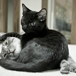 Grayson & Louis