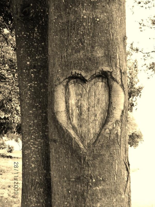 hug a tree, it  has a heart