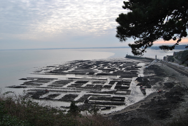 Cancale's oyster farm..creepy